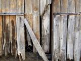 Wood2514.jpg