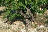 Wijn1511.jpg
