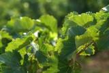 Wijn1610.jpg