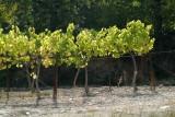 Wijn2656.jpg