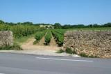Wijngaard-chateau-muur.jpg