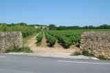 Wijngaard-muur02.jpg