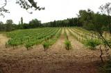Wijngaard021.jpg