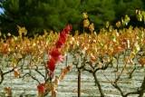 Wine7950.jpg