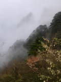 2018.Oct.China Trip.-Yellow Mountain.