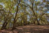 19 Trees near Goat Rock