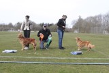 Dogshow - Vonge 17.04.2021