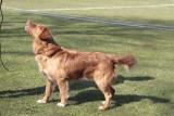 Dogshow - Vonge 18.04.2021