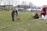 Dogshow - Tollerdays 2021, May 2nd