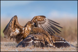collection_of_birds_of_prey
