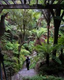 Auckland Fernery