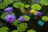 Wellington Botanic Gardens