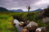 Dead Tree, Rannoch Moor