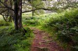 Manesty Path
