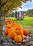 _MG_1919 Patriotic Pumpkins