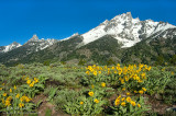 Tetons snow capped with flower base