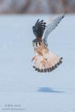 Kestral flight