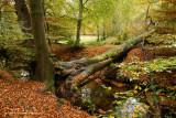Brook in autumncolor - Beek in herfstkleur
