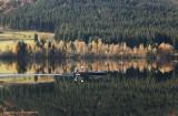 Zwarte woud - Schwarzwald - Black Forest