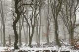 Beukenbos - Beech forest winter 4