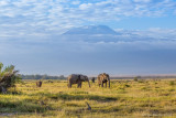 M4_10987 - Elephants and Mt. Kilimanjaro
