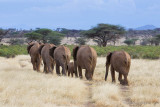 M4_11163 - Following the Elephant Herd