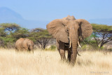 1DX_7167 - Elephants