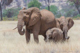 1DX_7425 - Elephants