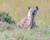 1DX12327 - Hyena
