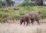 1DX_6682 - Baby Elephants