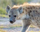1DX_6033 - Hyena