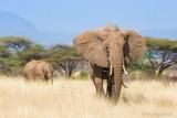 1DX_7167 - African Elephants