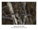 Great Gray Owl-068