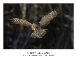 Great Gray Owl-076