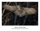 Great Gray Owl-077