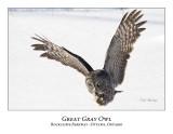 Great Gray Owl-079