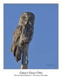 Great Gray Owl-080
