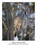 Great Gray Owl-092