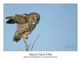Great Gray Owl-093