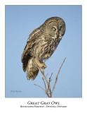 Great Gray Owl-094