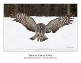 Great Gray Owl-99
