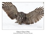 Great Gray Owl-101