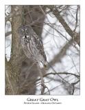 Great Gray Owl-106