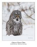 Great Gray Owl-112