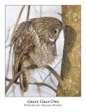 Great Gray Owl-115