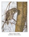 Great Gray Owl-116
