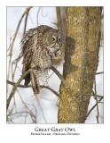 Great Gray Owl-117