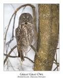 Great Gray Owl-118
