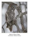 Great Gray Owl-119