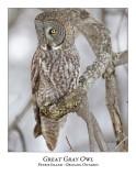 Great Gray Owl-120